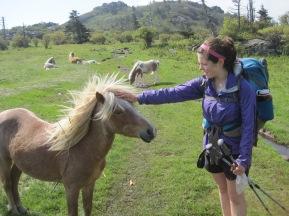 Feral ponies roam the Grayson Highlands.
