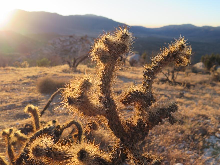 Hello cactus.